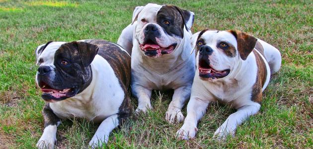 أحسن كلاب في العالم