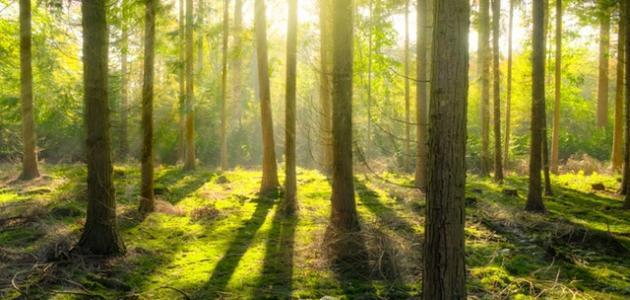 كيفية المحافظة على الغابات