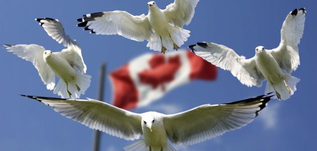 ما هي اللغة الرسمية لدولة كندا