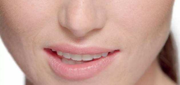 أجزاء الفم في الإنسان