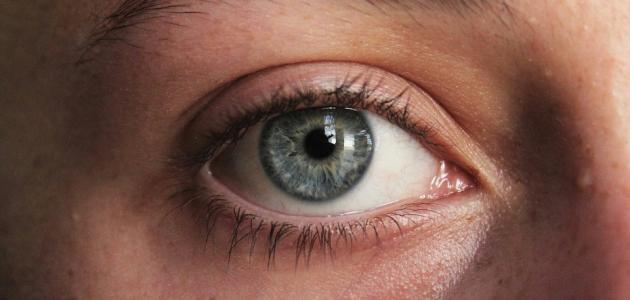 أجزاء العين الخارجية