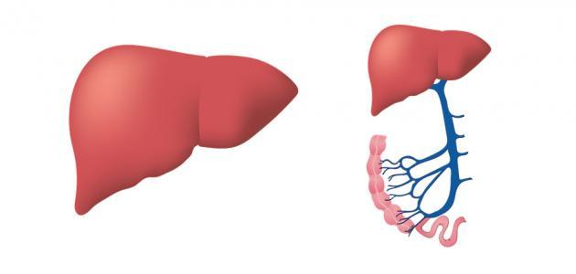 ما هو تضخم الكبد وعلاجه