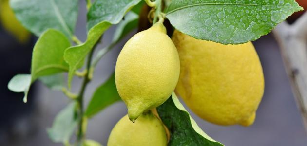 ما فائدة أكل الليمون بقشره