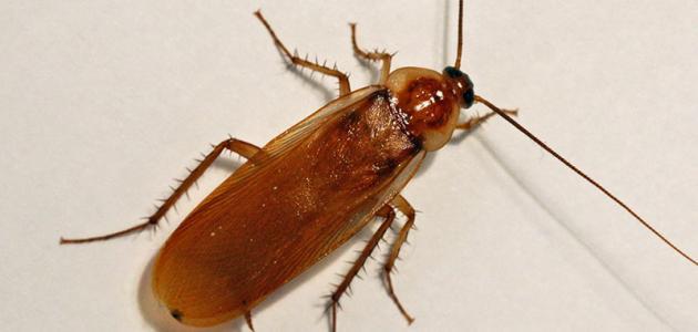كيفية القضاء على الحشرات المنزلية