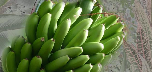 كيف أحفظ الموز