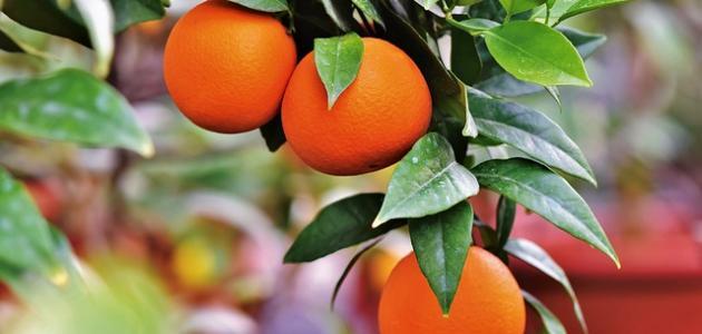 ما هي أكثر الدول إنتاجاً للبرتقال