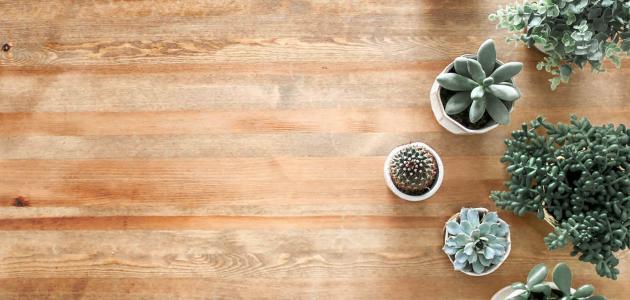 كيفية العناية بنباتات الزينة