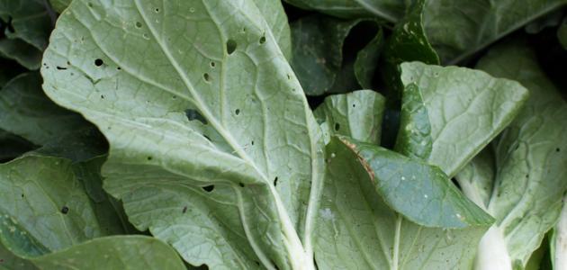 طريقة طبخ نبات السلق