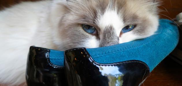 كيفية إزالة رائحة الحذاء