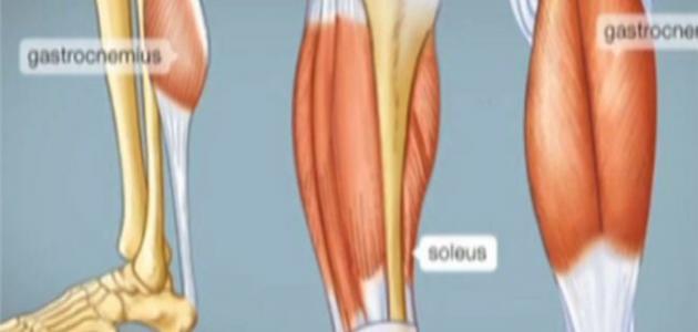 كيف يحدث الشد العضلي