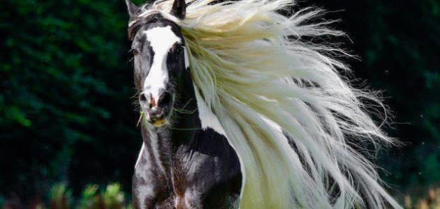 ذكاء حصان