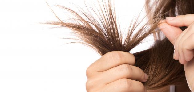 كيف أتخلص من تقصف الشعر
