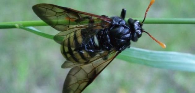 كيفية القضاء على الحشرات الطائرة