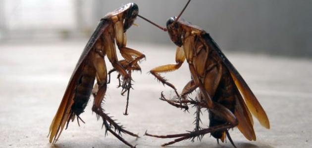كيفية القضاء على الحشرات الزاحفة