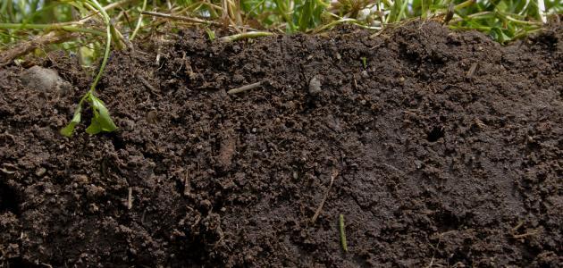 ���� ������ كيف_نحمي_التربة.jpg
