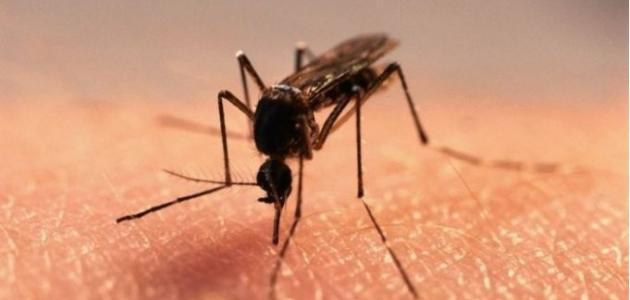كيفية القضاء على البعوض