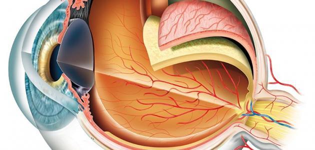 من أول من شرح تركيب العين