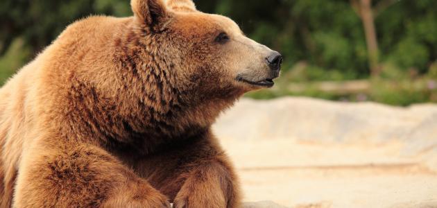 كيفية حماية الحيوانات المهددة بالانقراض