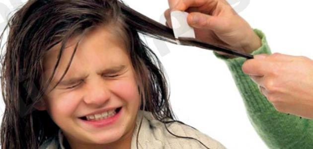 طرق علاج حشرات الشعر