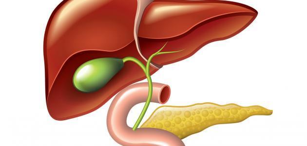 كيف التخلص من دهون الكبد
