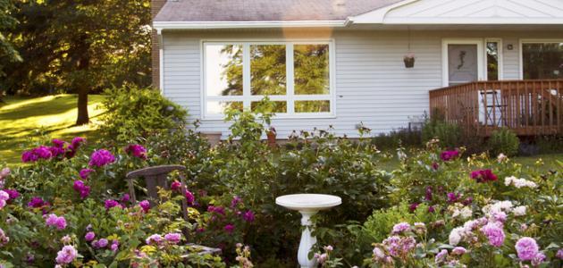 كيف تزرع الورد في المنزل