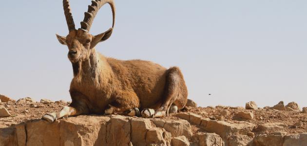 كيف يمكن حماية الحيوانات من الانقراض