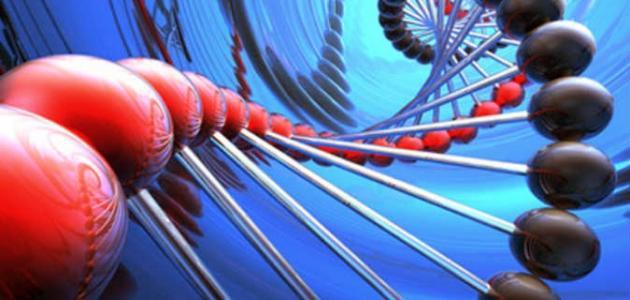 ما أهمية تنوع خلايا جسم الانسان