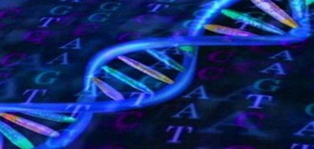 ما المقصود بالشيفرة الوراثية