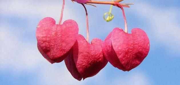 ما علامات القلب السليم
