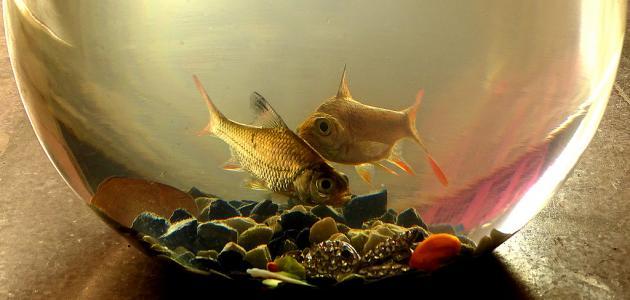 كيفية العناية بحوض سمك الزينة