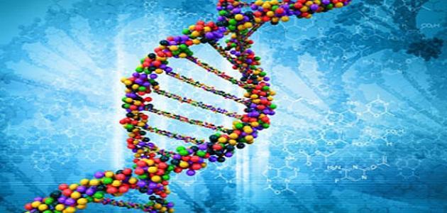 كيفية عمل فحص DNA