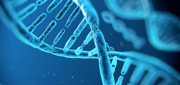 ما هو RNA
