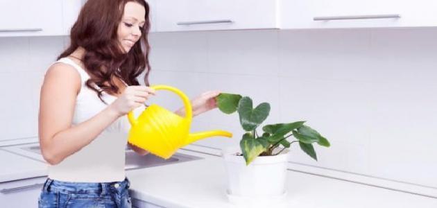 كيفية العناية بالنباتات