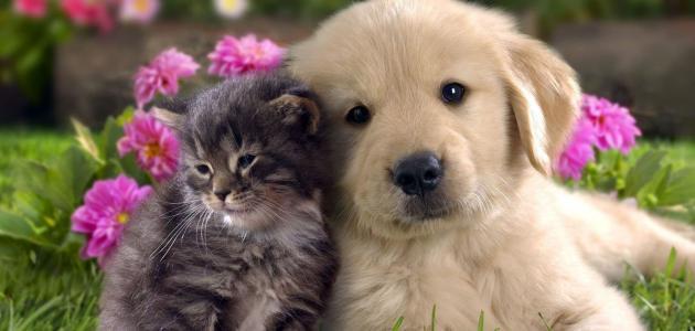 ما هو أفضل حيوان أليف