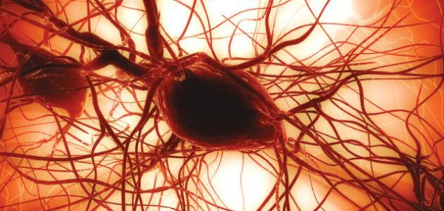 13e7b2d83 كيفية علاج نقص الصفائح الدموية - موضوع