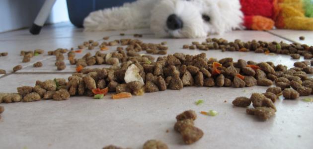 ما هو طعام الكلاب