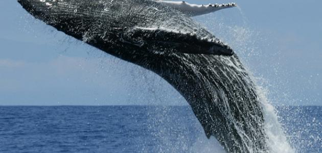 ما هو أضخم حيوان في العالم