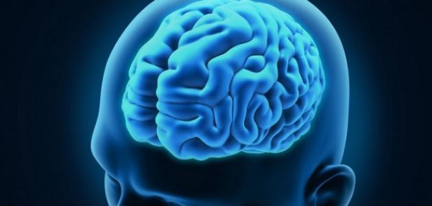 ما هو غذاء المخ
