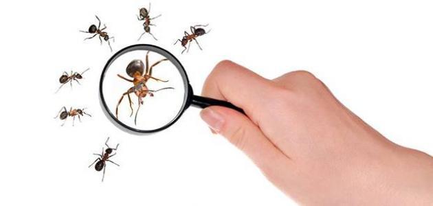 كيفية مكافحة النمل