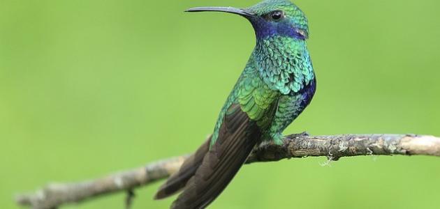 اجمل طيور