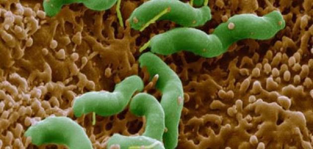 ما هي عوارض جرثومة المعدة