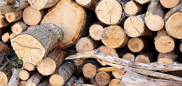انواع الخشب بالصور from modo3.com