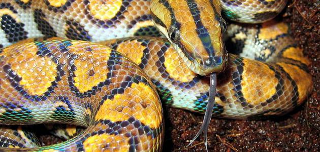 أنواع الثعابين