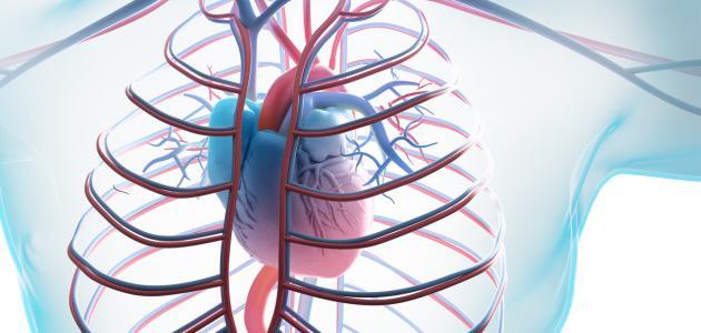 أنواع أمراض القلب