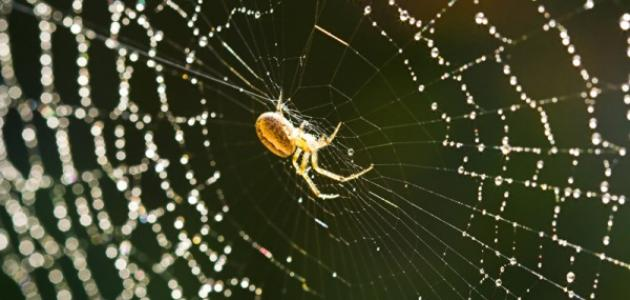 ماذا يسمى بيت العنكبوت