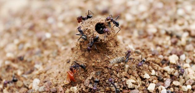 ماذا يطلق على بيت النمل
