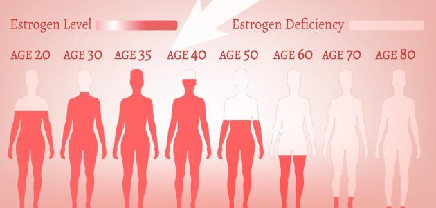 ما هو دور هرمون الإستروجين