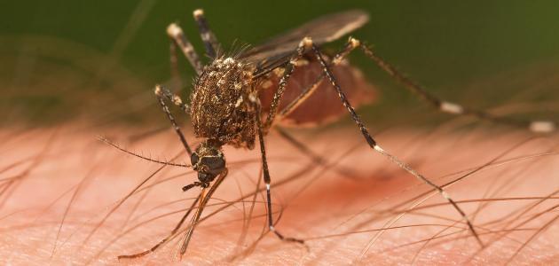ما هي أعراض الملاريا