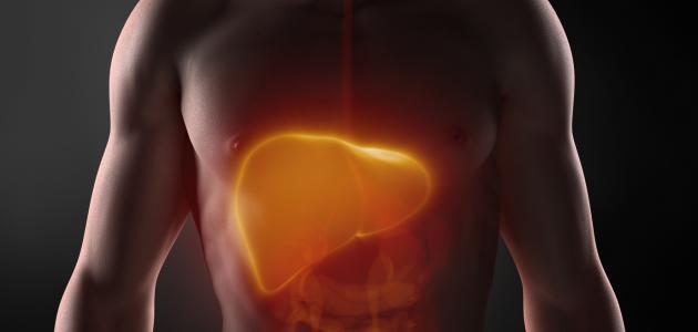 أين يقع الكبد في جسم الإنسان