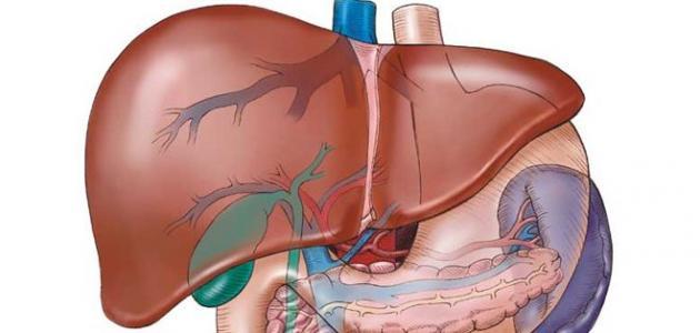 ما هي أعراض التهاب الكبد